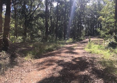 Brisbane Trail Marathon Race trail photo